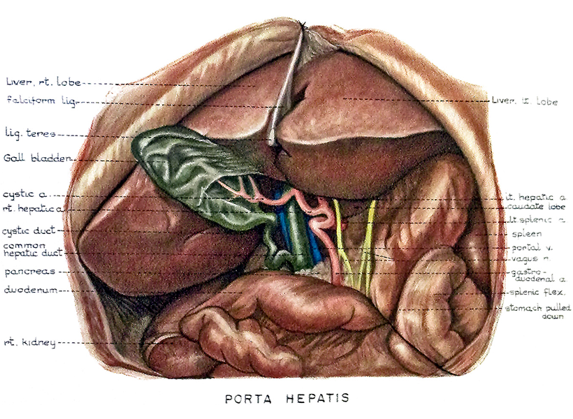Clinical Anatomy Cheney Illustrations